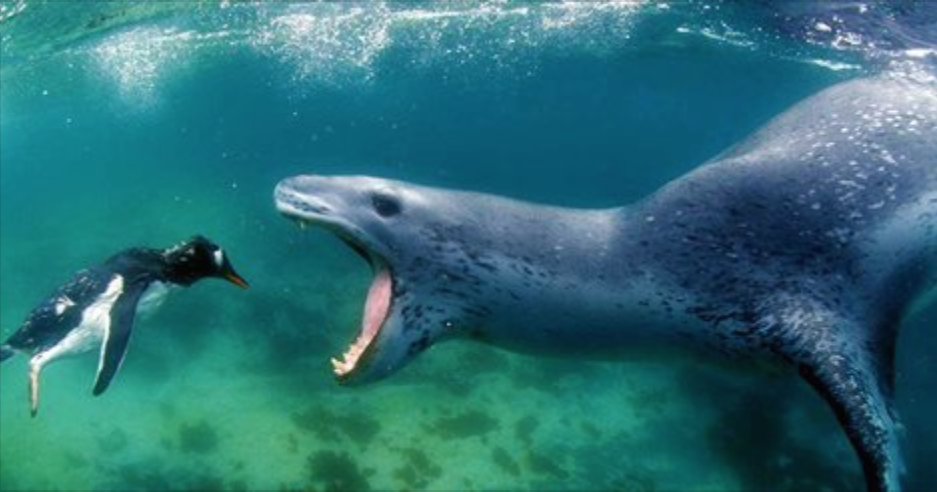 This Photographer Comes Face-to-Face with A Deadly Leopard Seal. What Happens Next Will Blow Your Mind.