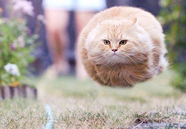 amazing-timed-animal-pictures-14
