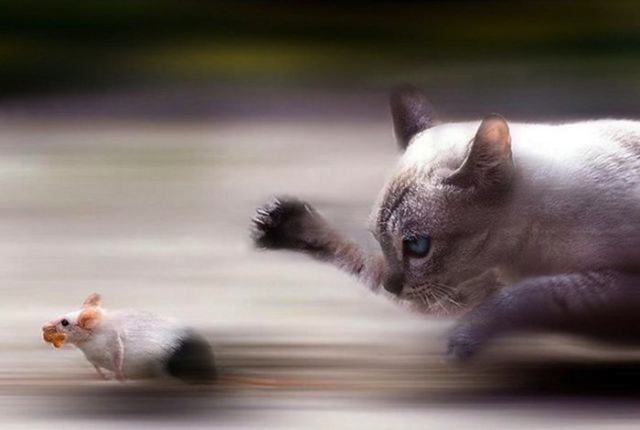 amazing-timed-animal-pictures-2