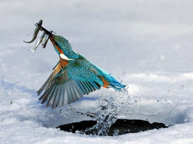 amazing-timed-animal-pictures-21
