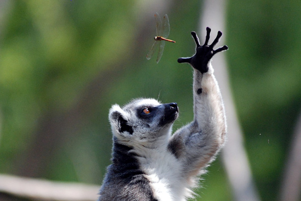 These 41 Flawlessly Timed Animal Photos Are So Perfect They're Brilliant.  #38 = Unbelievable.