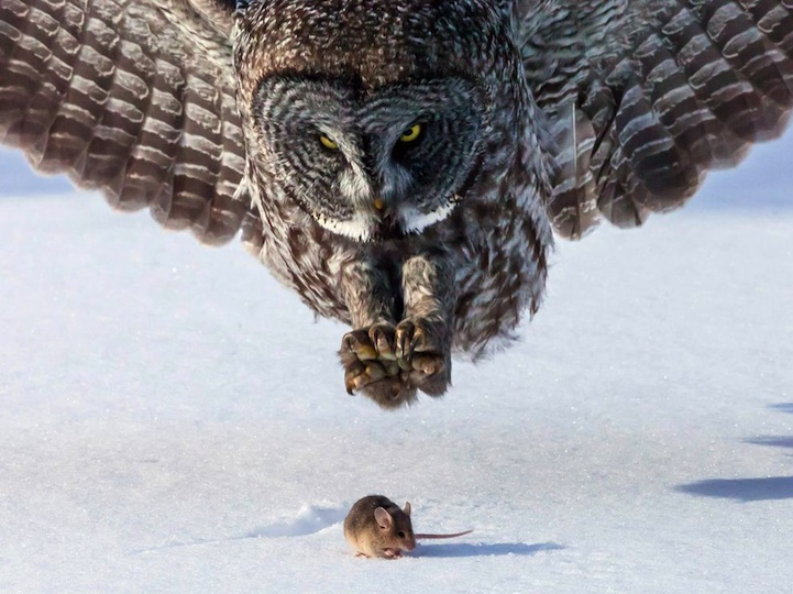 Flawlessly-Timed-Animal-Photos-Perfect-39