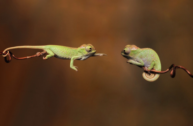 Flawlessly-Timed-Animal-Photos-Perfect-9
