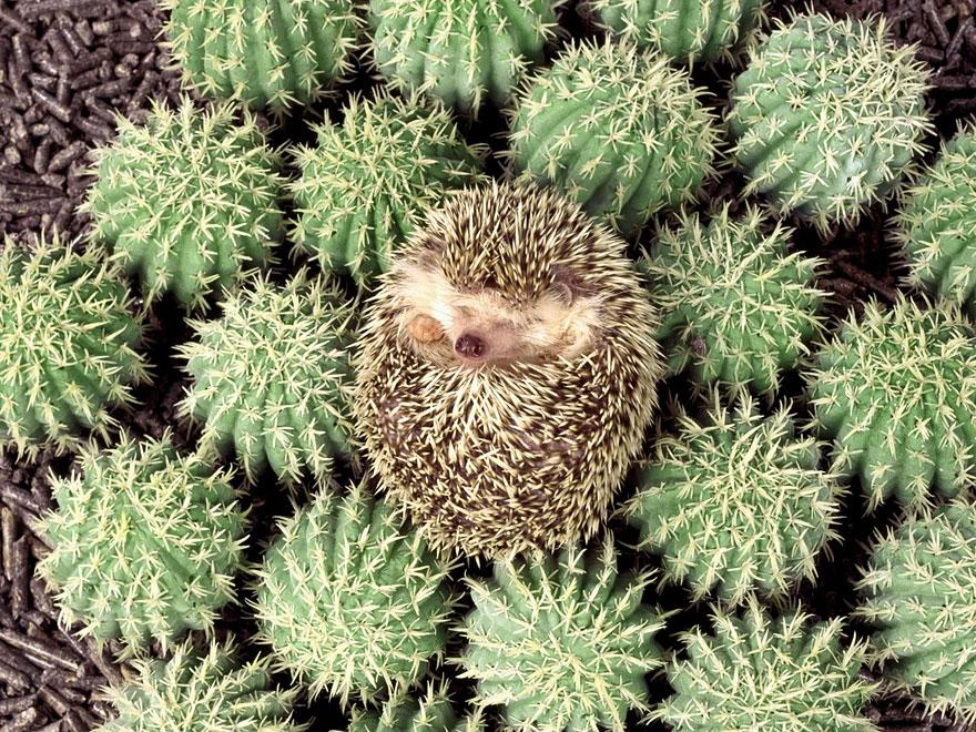 These 27 Camouflaged Animals Are So Hidden You'll Have To Look Twice.  Can You Spot The Animal?