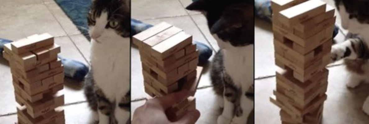This Cat Has Skill, But How He Plays Jenga Will Amaze You. You'll Never Believe It Till You See It. Whoa.