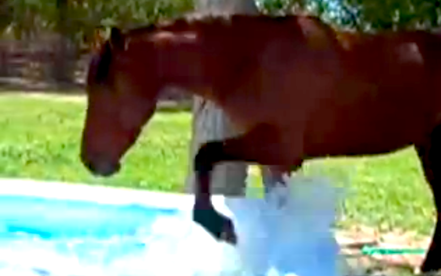 This Horse Discovered A Kiddie Pool Then Something Amazing Happened. All Animals Deserve To Be This Happy.