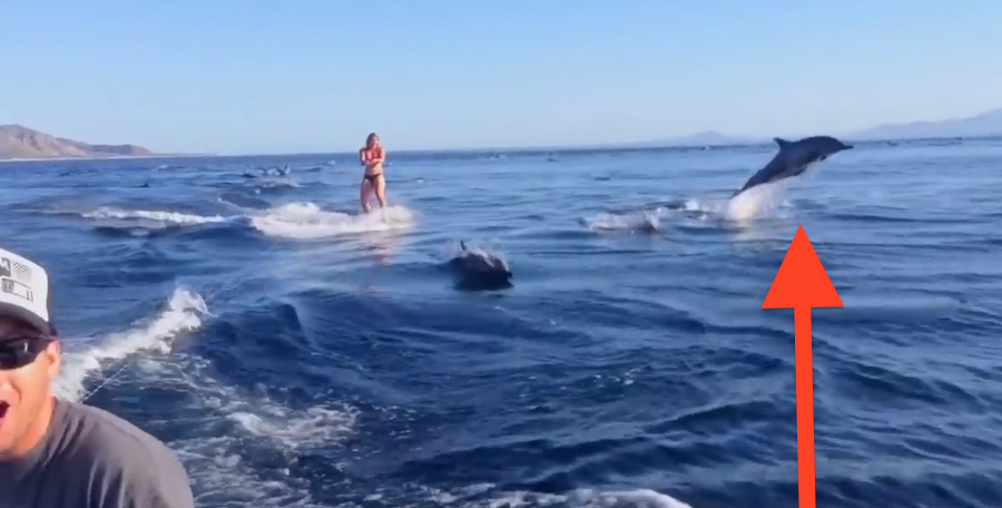 This Wake Boarder Never Expected A Surprise Like This, But What Happens Next Is Nothing Short Of Amazing!