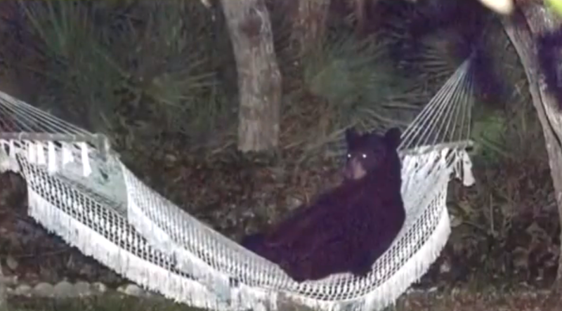 This Bear Was Tired, But You'll Never Believe What It Decided To Do NEXT! You Gotta See This, WOW…