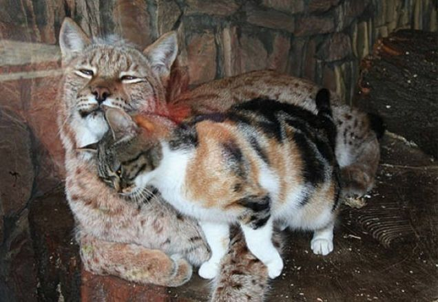 This Hungry Cat Snuck Into A Zoo To Find Some Food, But I'll Never Forget What Happened Next…