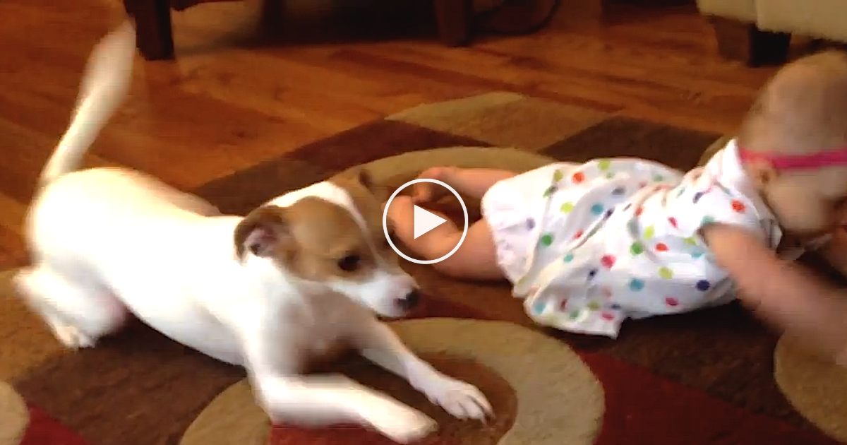 This Baby Was Struggling To Walk, So This Dog Teaches Her How To. Now That's Amazing…