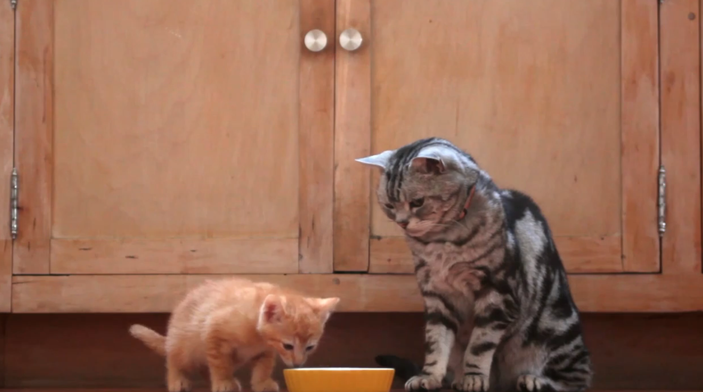 I Don't Care If it's A Commercial, 'Dear Kitten' Is The Cutest Ad You'll Ever Watch. Hands Down!