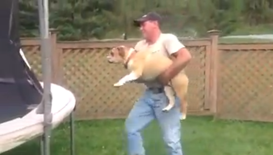 This English Bulldog Is Having The Time Of His Life On A Trampoline. What He Does = HILARIOUS! OMG…