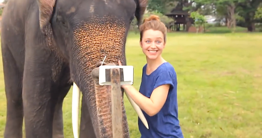 I Knew Elephants Were Smart, But I NEVER Thought They Would Do THIS. Amazing!!!