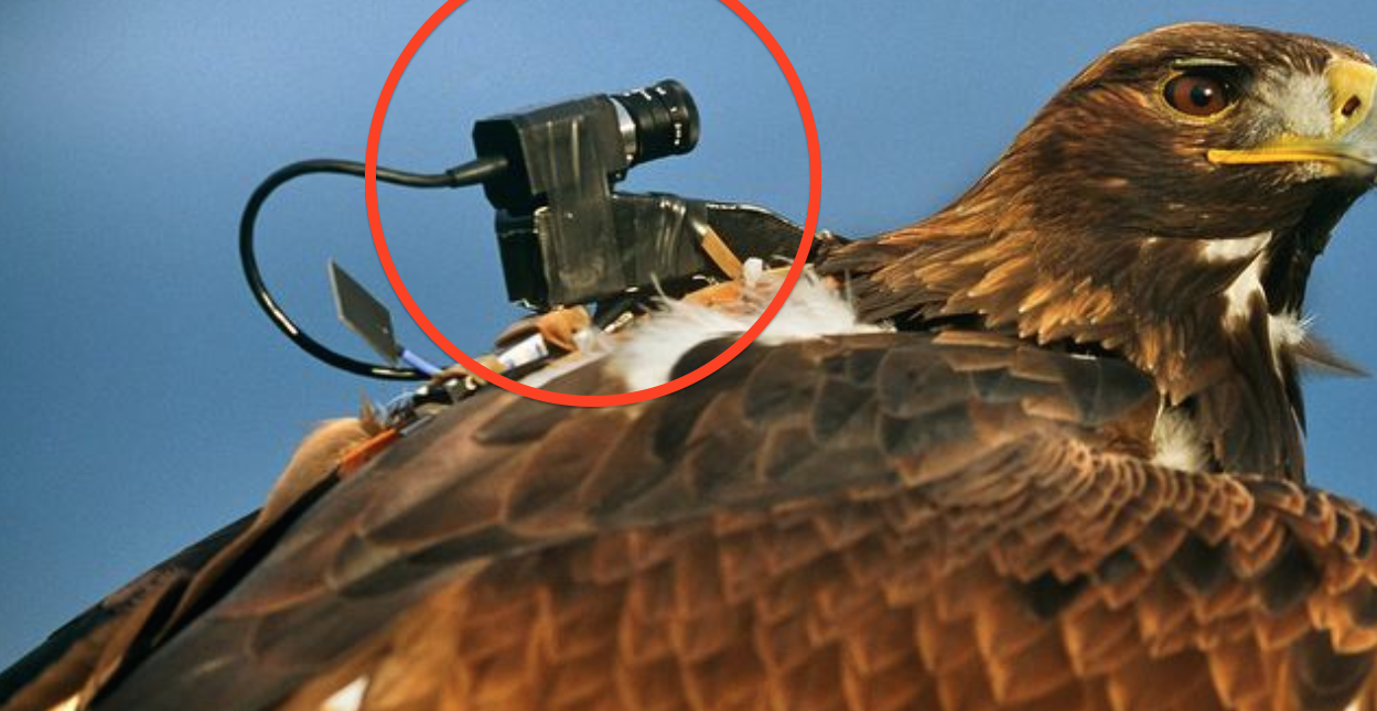 They Strapped A Camera To A Bird's Back… You'll NEVER Believe What Was Caught On Camera. WOW…