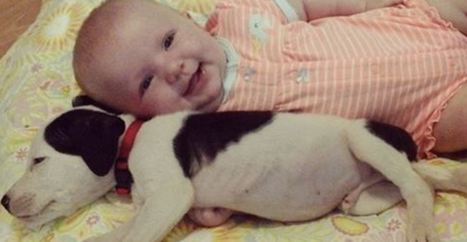 This Baby And Pit-Bull Puppy Snuggling Together Are Almost Too Cute To Believe. OMG…