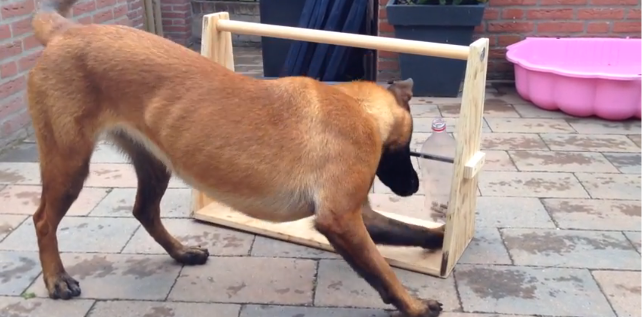 This New Game Keeps Dog Entertained For HOURS – Every Dog Owner Needs One Of These! Genius!