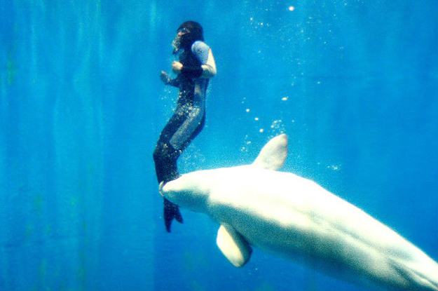 beluga-whale-saves-diver2