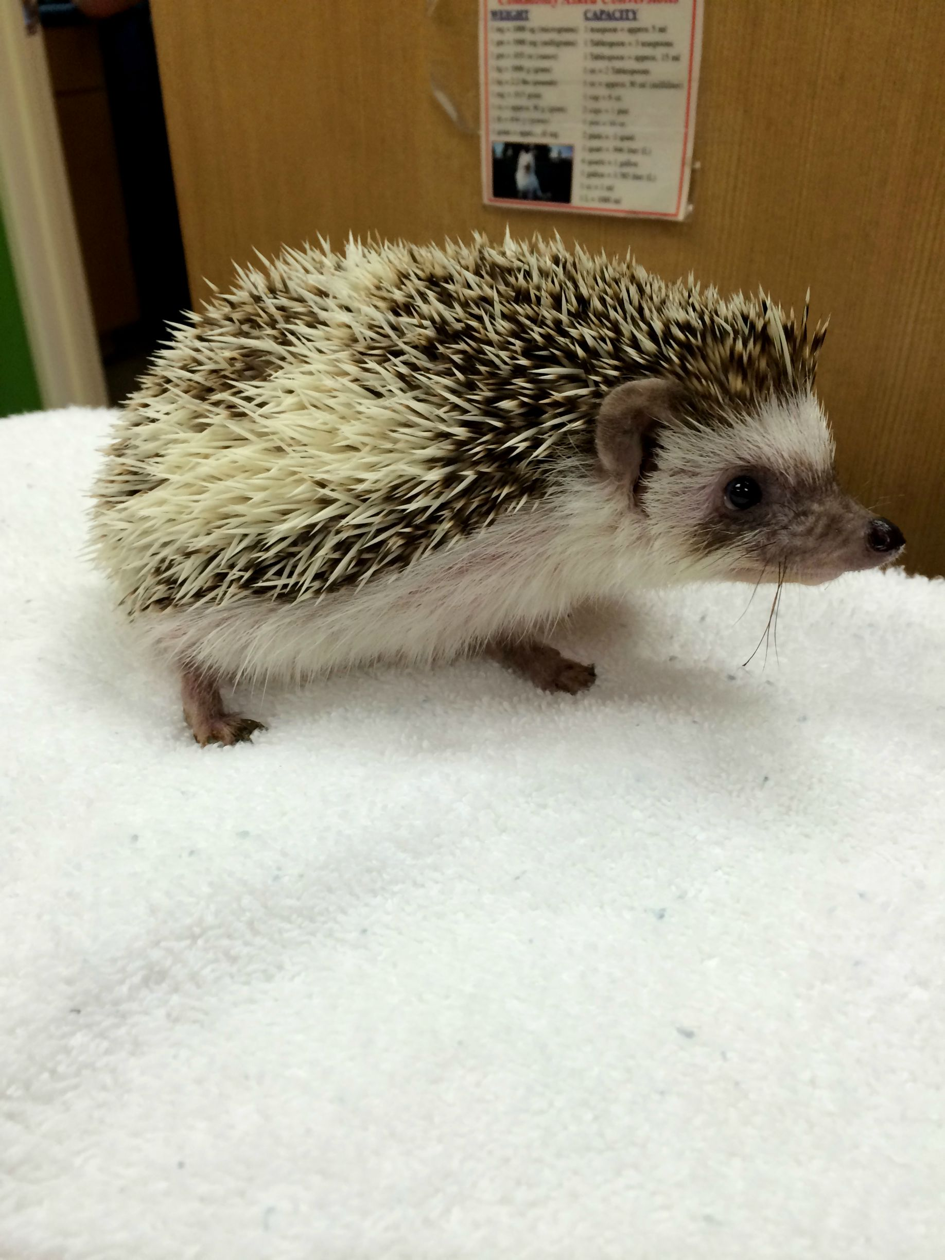 benny-hedgehog-before