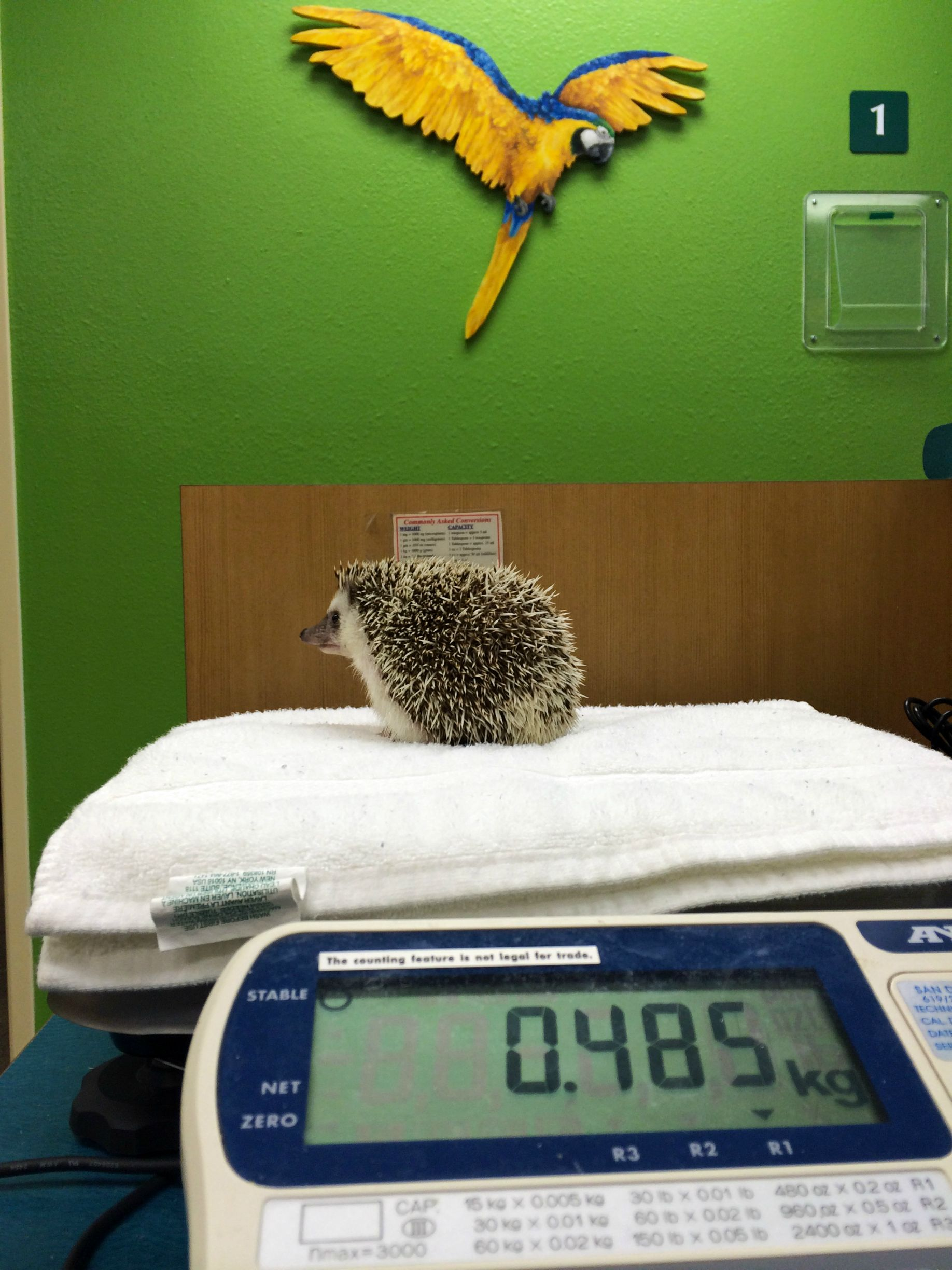 benny-hedgehog-on-scale