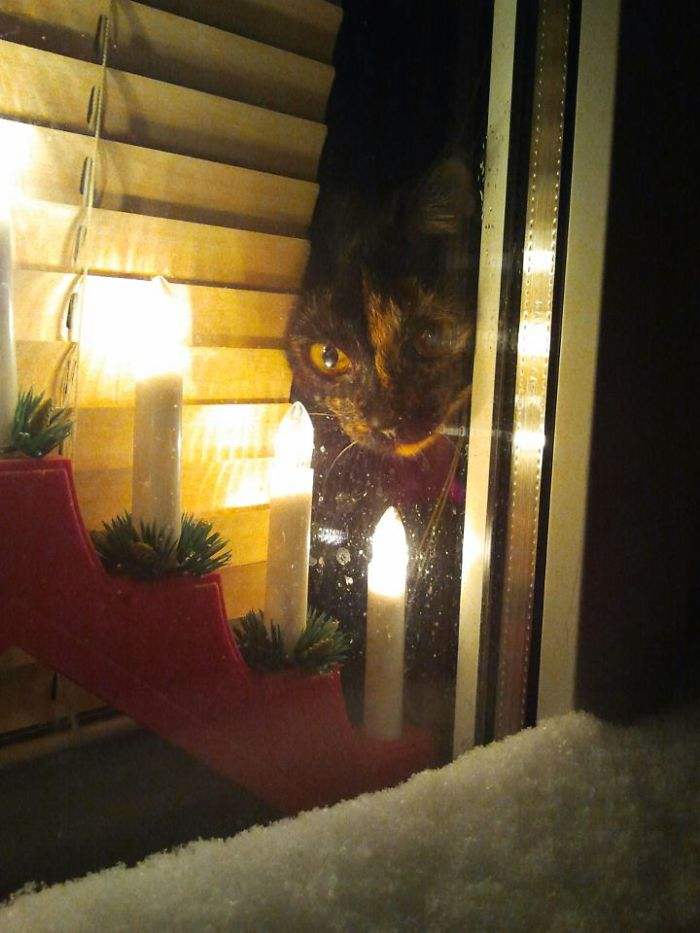 cat-christmas-window