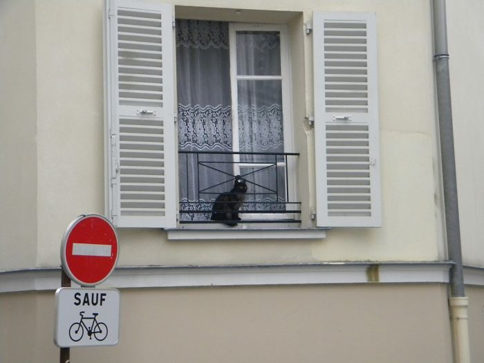 cat-paris