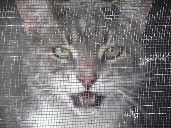 cat-screen-door