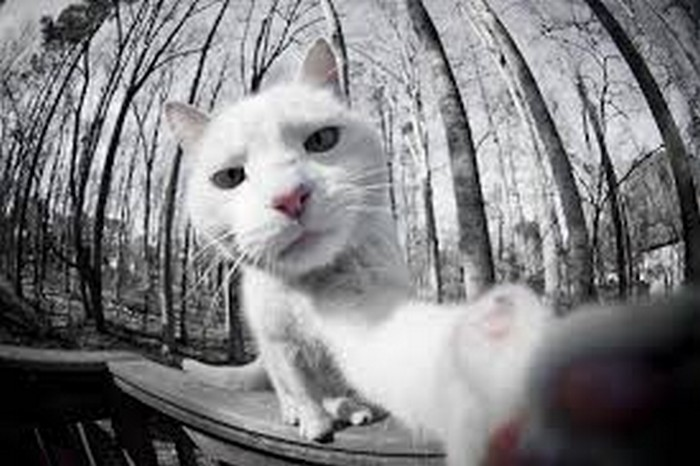 cat-selfie-woods