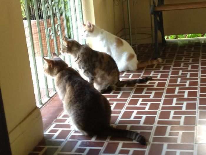 cat-trio-waiting