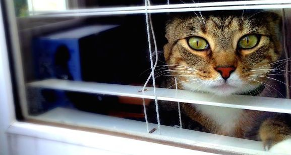 12 Lonely Cats Who Are Waiting For Their Human To Come Home…#7 Is So Sad Looking!