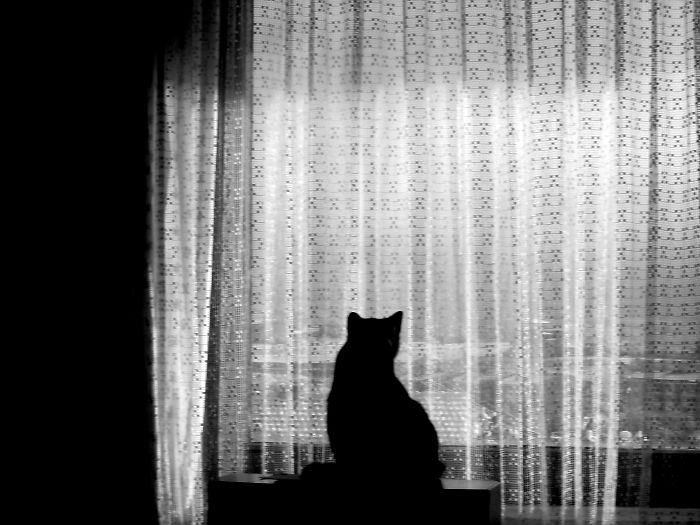cat-window-curtains