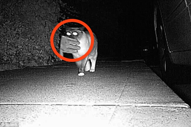 Some Residents Installed A Camera After Realized Things Were Stolen. Footage Showed Strange Thief…