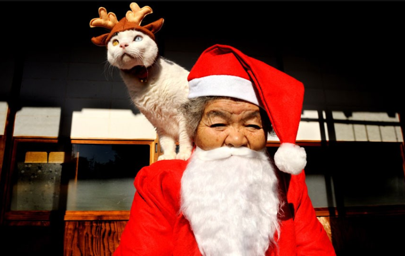 japanese-grandma-and-cat-christmas