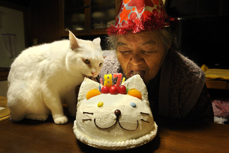 japanese-grandma-and-cat-eating-cake