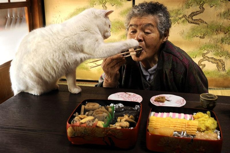 japanese-grandma-and-cat-eating