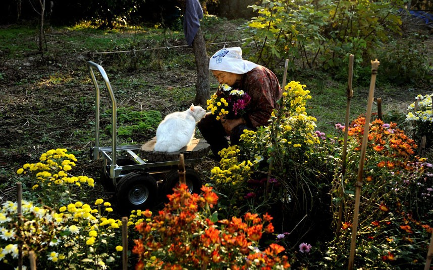 japanese-grandma-and-cat-gardening