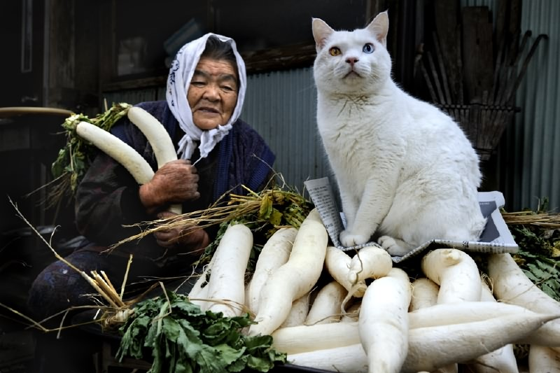 japanese-grandma-and-cat-harvesting