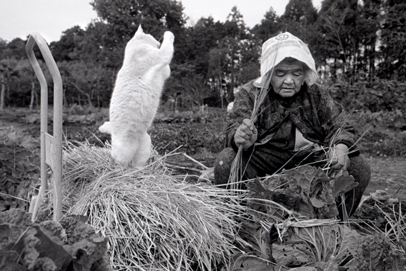 japanese-grandma-and-cat-hay