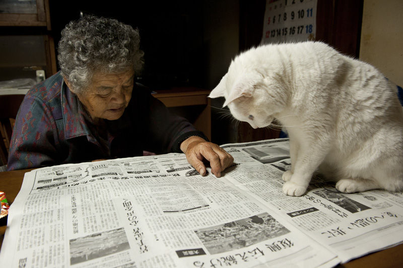 japanese-grandma-and-cat-newspaper