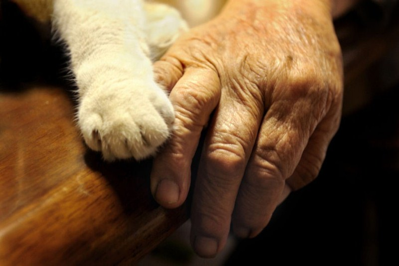 japanese-grandma-and-cat-paws
