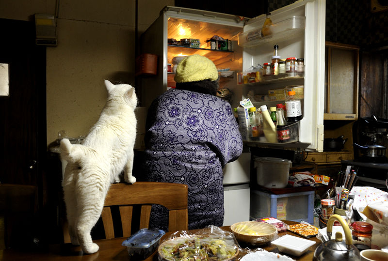 japanese-grandma-and-cat-refrigerator