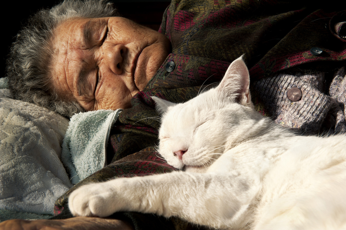 japanese-grandma-and-cat-sleeping