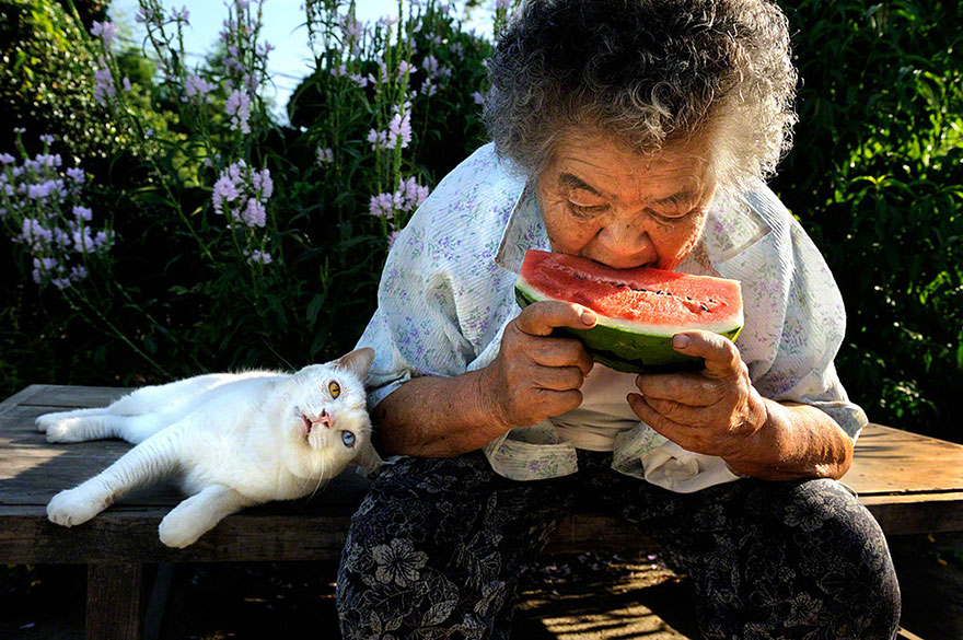 japanese-grandma-and-cat-watermelon