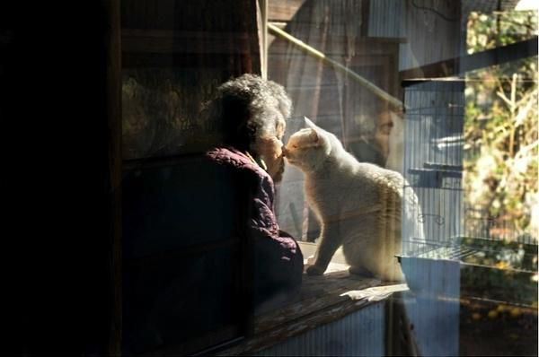 japanese-grandma-and-cat-window