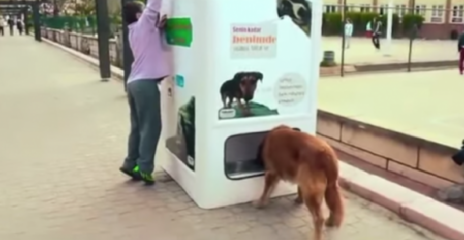 This Brilliant Invention Could Save MILLIONS Of Dogs's Lives. Wait Till You See What This Stray Puppy Does With It…