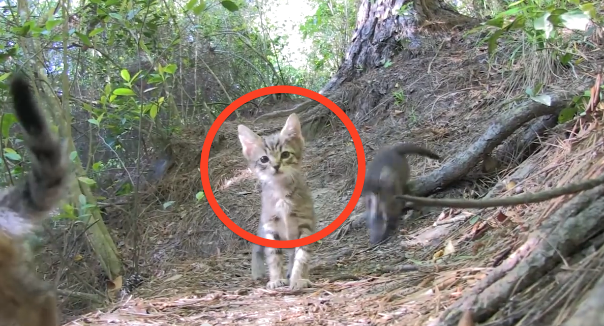 I Can't Believe What This Couple Found In The Woods – What A Beautiful Rescue! You HAVE To See This!