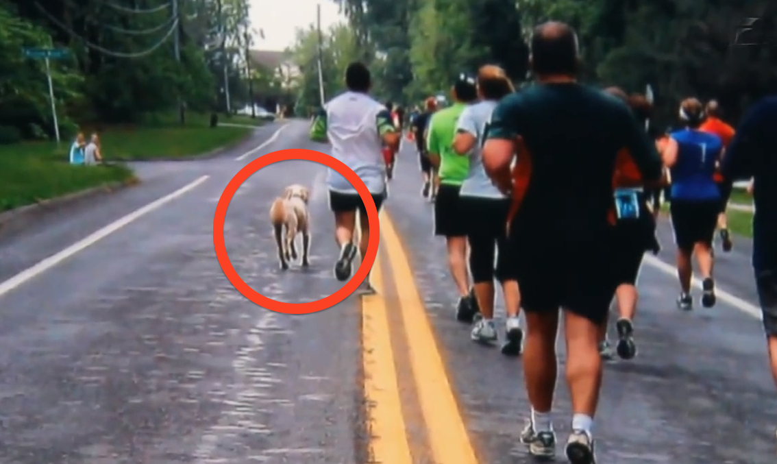 When This Dog Saw A Bunch Of Runners Race Past His House, He Did Something No One Had Expected…