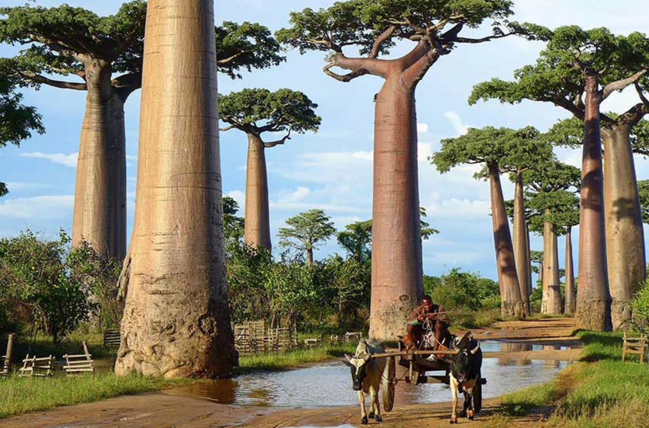 The 16 Most Spectacular Trees Found In The World…#10 Took My Breath Away