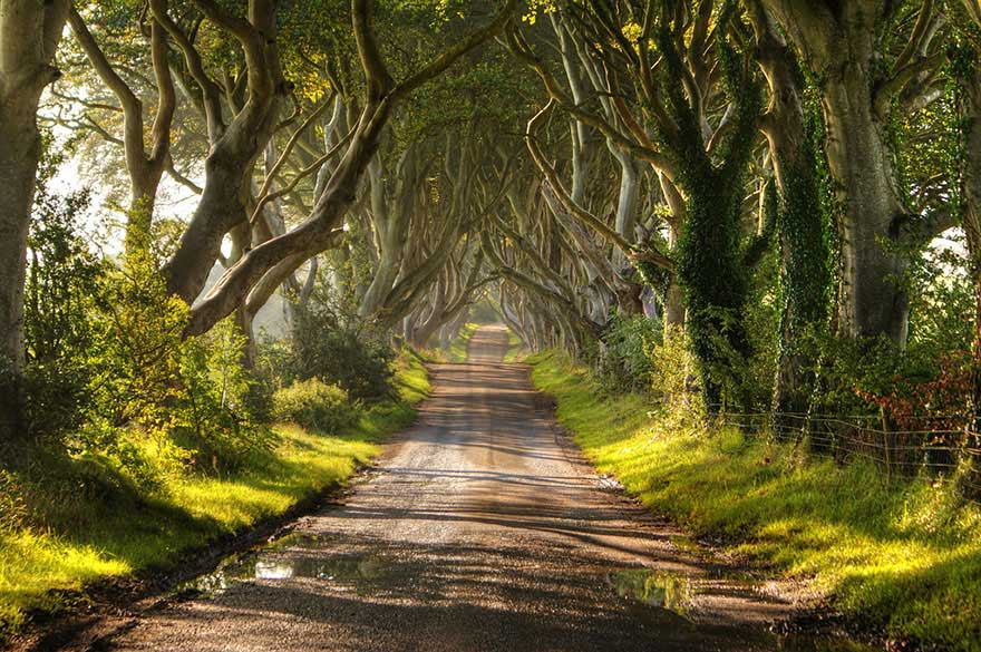 amazing-trees-dark-hedges-2