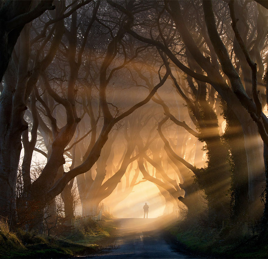 amazing-trees-dark-hedges