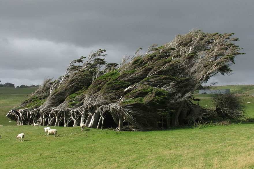 amazing-trees-new-zealand